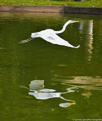 We are reflections of our choices!!! (Samila Carvalho) Tags: reflexo voo asas voar livre free bird