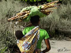 O_PESO_DO_SUSTENTO_E_DO_FUTURO_ENTRE_LAGOS_MOÇAMBIQUE (paulomarquesfotografia) Tags: paulo marques sony hx400v bebe children baby women mulher africana trajes cultura tradição campo field cotidiano daily