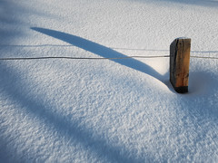 Post in Snow (Bracus Triticum) Tags: post snow calgary カルガリー アルバータ州 alberta canada カナダ 3月 弥生 さんがつ yayoi newlifemonth 2018 平成30年 spring march 三月 sangatsu