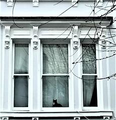 Jellicle, latchkey fur-kid ... (dodagp) Tags: uk london furkids cats animallovers thomasstearnseliot18881965 poets dramatists musicals music andrewlloydwebber directors sirtrevornunn choreographers gillianlynne lyricstseliot oldpossumsbookofpracticalcats unforgettableperformances