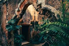 Unexplored ? (julien.ginefri) Tags: mexico méxico america latinamerica yucatán yucatan hacienda ruin ruina sanpedroochil