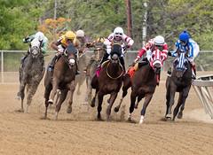 2018 Pimlico Race track (59) (maskirovka77) Tags: pimlico dirt mare race racehorse threeyearold turf yearling