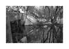 (billbostonmass) Tags: agfa 400apx 119silvermax1000min68f fm2n 40mm ultron north cambridge massachusetts alewfe epson v800 film