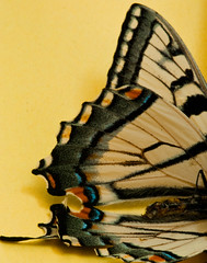 Butterfly-4 (Paul Broderick) Tags: butterfly lightroom nikond90 macro