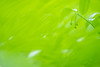 almost green (N.sino) Tags: xt1 summicron90mm green weed bud drop raindrop 緑 雫 雨粒 神代植物公園