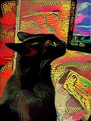Sam at the Vet (CopperScaleDragon) Tags: cat black blackcat veterinarian vet doctor catclinic seizure health alien dreamscope