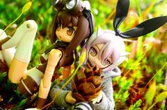 BOB_1146 (AeroHail) Tags: toyphotography busoushinki 武装神姫 パーティオ busou shinki partio ポモック セット プロトタイプバージョン proto pomock ピコニーモ moss