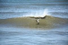 Brown Pelican (SeannPatrickPhotography) Tags: outerbanks coast atlantic northcarolina nc obx beach midatlantic ocean