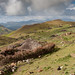 Ethiopian landscape, approaching the Bale mountains
