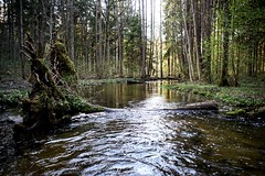 river life (daimak) Tags: river forest woods water landscape lithuania sonyilce7