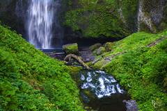 Middle Multnomah Green (RobertCross1 (off and on)) Tags: a7rii alpha bensonfootbridge columbiarivergorge emount fe1635mmf4zaoss ilce7rm2 longexposure multnomah multnomahfalls nationalscenicarea or oregon pacificnorthwest sony creek ferns flowers forest fullframe landscape mirrorless moss nature rapids river stream water waterfall