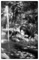 826816644015307 (Alexander Krasotkin) Tags: italy capri matera naples ischia monocle leica film 35mm ilford