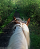 Exploring The Forest (M C Smith) Tags: horse forest track white brown green bushes leaves grass branches fence flowers