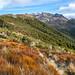 Mt Arthur Hut Walk, Kahurangi National Park, Tasman