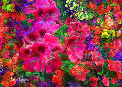 Vivid Blooms (brillianthues) Tags: flowers floral garden nature begonias colorful collage photography photmanuplation photoshop
