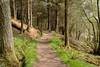 Footpath (Gordon McKinlay) Tags: balmaha conic hill walk lochlomond trossachs nationalpark nature may 2018 nikon dslr d750