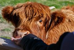 Walter Peak Farm (mirsasha) Tags: newzealand queenstown 2018 april walterpeak otago nz