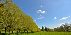 CROFT CASTLE  PARKLAND (chris .p) Tags: croft castle herefordshire nikon d610 view trees parkland spring 2018 nt nationaltrust may capture tree landscape england uk