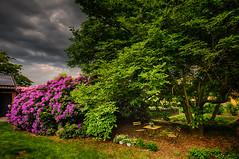 sun and silence (radonracer) Tags: garden garten niederrhein idylle ruhe