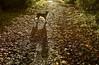 Milly (lotharmeyer) Tags: licht dogs forest gegenlicht wald herbst hund natur nikon milly lotharmeyer