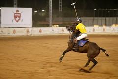 Hyderabad Polo Season @HPRC (Captured by Bachi) Tags: horses love game polosport equestrain animals polo horse canon eos 70d