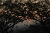 Stay till the sun sets (preze) Tags: aravallihills jaipur rajasthan india nordindien northindia outdoor sonnenuntergang sunset sundown stadt town dunst dust city häuser smog mist silhouettes silhouetten