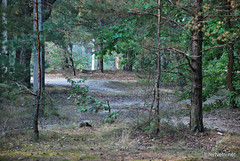 Волинський ліс InterNetri Ukraine 1072671071