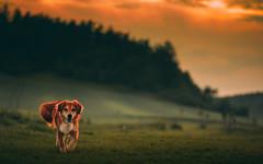Sunset (romanhrbek) Tags: mickey sunset sony alpha a6500 85mm dog landscape photography storm is coming horizon