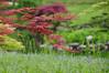Spring colours (natureloving) Tags: spring nature printemps erable nikkor 18300 may natureloving nikon d90 landscape japanesemaple meadow