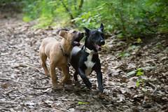Bibi0516-2093 (adam.leaf) Tags: canon 6d 24105l leafling forest dog