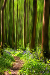 See into the trees... (fearghal breathnach) Tags: killinthomaswoods bluebells woods forestpath motionblur blur abstract forest