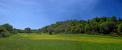 Rolling Nature: Spring ! (gtsimis) Tags: nature spring panoramic outdoorphotography polarized saturated grass flowers blue green yellow fullframe pentaxk1