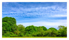 Look; up in the sky... (Timothy Valentine) Tags: 2018 large 0518 sky trees 52weeks stoughton massachusetts unitedstates us panorama