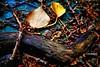 Rester de bois (CELURBEX) Tags: vaucluse ancien abandonado abbandonato abandoned abandonné old vieux explorar esplorare explore wasteland friche oublié urbex exploration urban graffity graff tag water eau industrie production lumix carton papier macro