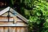 Bird Feeder (terrydevonshire) Tags: wood rustic ivy wooden shed log bush green old architechture beautiful bird feeder seed garden natural