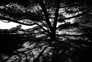 Tree Saint-Guirec - atana studio