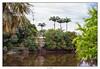 palms (Carlos E Cortés Parra) Tags: landscape palms river house