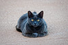 Smokey on the Deck (lennycarl08) Tags: smokey cat kitty lc