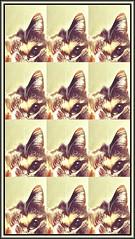 A clowder of Debbie (Bob R.L. Evans) Tags: abstract surreal catear verticalandhorizontal cateye unusual repetition rhythm