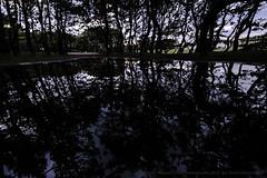 After rain (higehiro) Tags: afterrain sunset shonan park