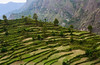 step cultivation (Nikondxfx (instagram)) Tags: 2015 d5200 india may travel hillstation hobby hobbyphotography nikon travelling travelphotography treveller uttarakhand step cultivation mountains hill