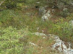 Крим, Таврські могильники на горі Кішка InterNetri Ukraine 2009 157