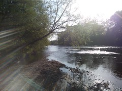 Streams of morning light (Sundornvic) Tags: light beams rays bright radiance morning trees woods nature shropshire