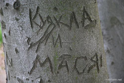 Ботанічний сад імені Гришка Буковий гай InterNetri  Ukraine 099