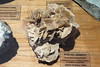 OVIEDO - MUSEO DE GEOLOGIA - ROSA DEL DESIERTO (mflinera) Tags: oviedo asturias museo de geologia rosa del desierto