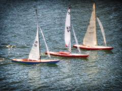 The Big Race (cb dg photo) Tags: boatshow pacific marinabay richmond sailboats remotecontrol pacificsailpowerboatshow sailing