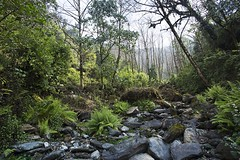 Forest Trek (Jean Ka) Tags: approved nepal népal dhampus forest forêt wald jungle vegetation pflanzenwelt rocks boulders felsen rochers rivière river bach landscape grass creek wood tree arbre bäume arbres bois