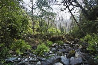 Forest Trek