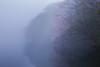 2606 (Keiichi T) Tags: 木 tree 霧 6d 靄 green 朝 cherryblossoms fog shadow eos haze canon 光 lake 湖 影 桜 リフレクション 水 日本 reflection morning japan water light