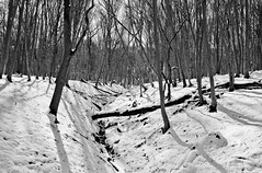 Forest valley (lupuszka) Tags: snow monochrome woods woodland winter backlight nature landscape landscapes trees cold natural bw blackandwhite analog film fuji neopan acros neopanacros nikonfe